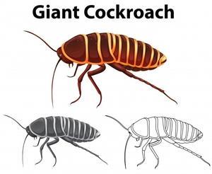 Пръскане срещу хлебарки 4