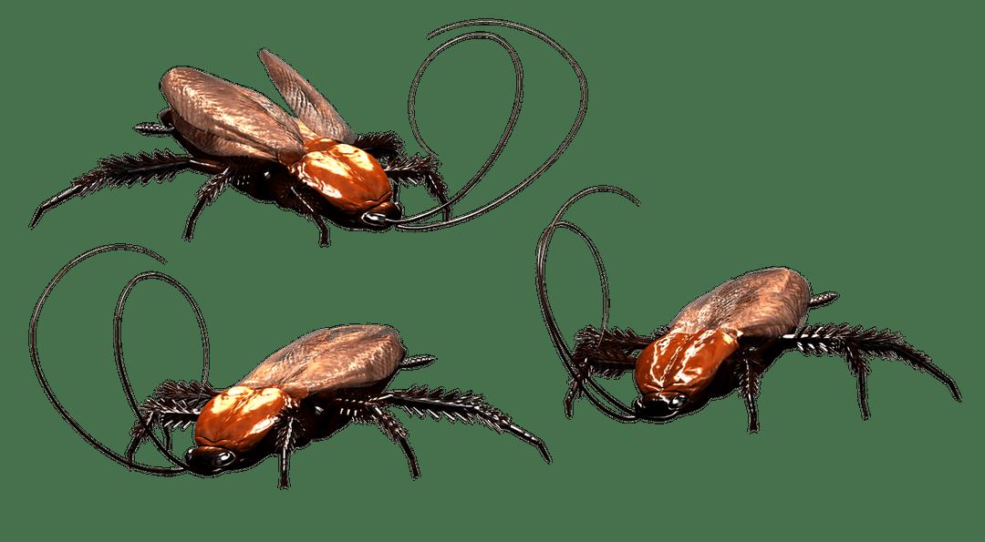 Хлебарки – какво трябва да знаете за тях?
