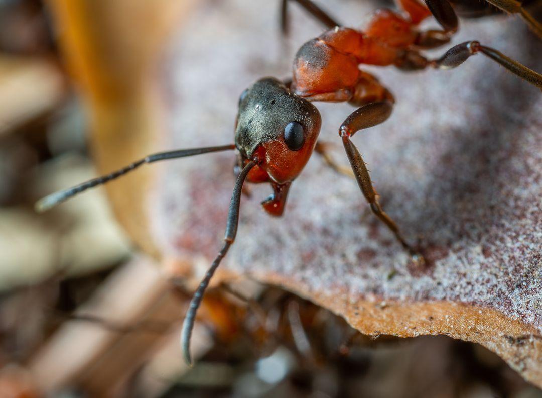 Полезни съвети при употреба на препарат против мравки