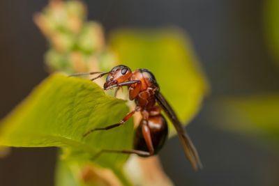 Мерки-против-мравки-вкъщи