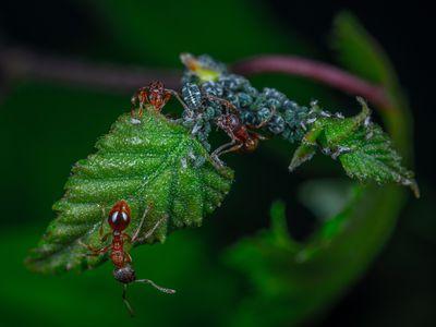 Препарат-против-мравки-вкъщи снимка