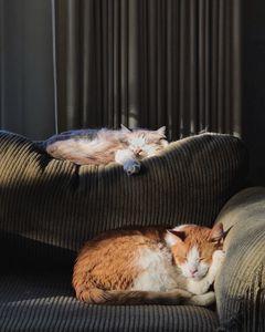Пръскане за бълхи 1 - котки